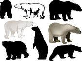 Eight polar bears on white — Stock Vector