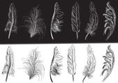 Twelve black and white isolated feathers — Cтоковый вектор