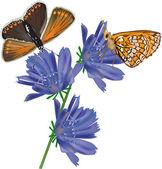 Two orange butterflies on blue flowers — Stock Vector
