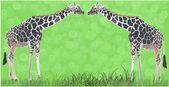 Two giraffes in green grass — Stock Vector