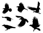 Set of eight crow silhouettes isolated on white — Stock Vector