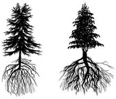 Two firs with roots isolated on white — Stock Vector