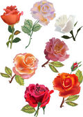 Seven isolated roses collection — Stock Vector