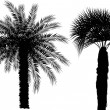 Two palm trees isolated on white — Stock Vector