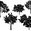 Five trees collection isolated on white — Stock Vector