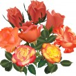 Large orange rose bouquet isolated on white — Stock Vector