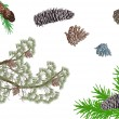 Isolated pine branches and cones collection — 图库矢量图片