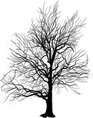 Bare tree silhouette isolated on white — Stock Vector