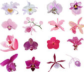 Sixteen orchids collection isolated on white — Stock Vector