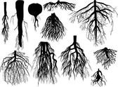 Set of black roots isolated on white — Stock Vector