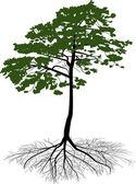 Groene pijnboom met zwarte root — Stockvector