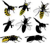 Eight wasps collection on white — Stock Vector