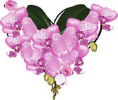 Heart shape bouquet from pink orchids on white — Vector de stock