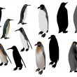 Twelve penguins isolated on white — Stock Vector