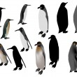 Stock Vector: Twelve penguins isolated on white