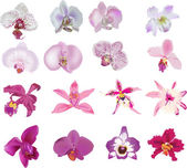 Set of sixteen isolated pink orchids — Stock Vector