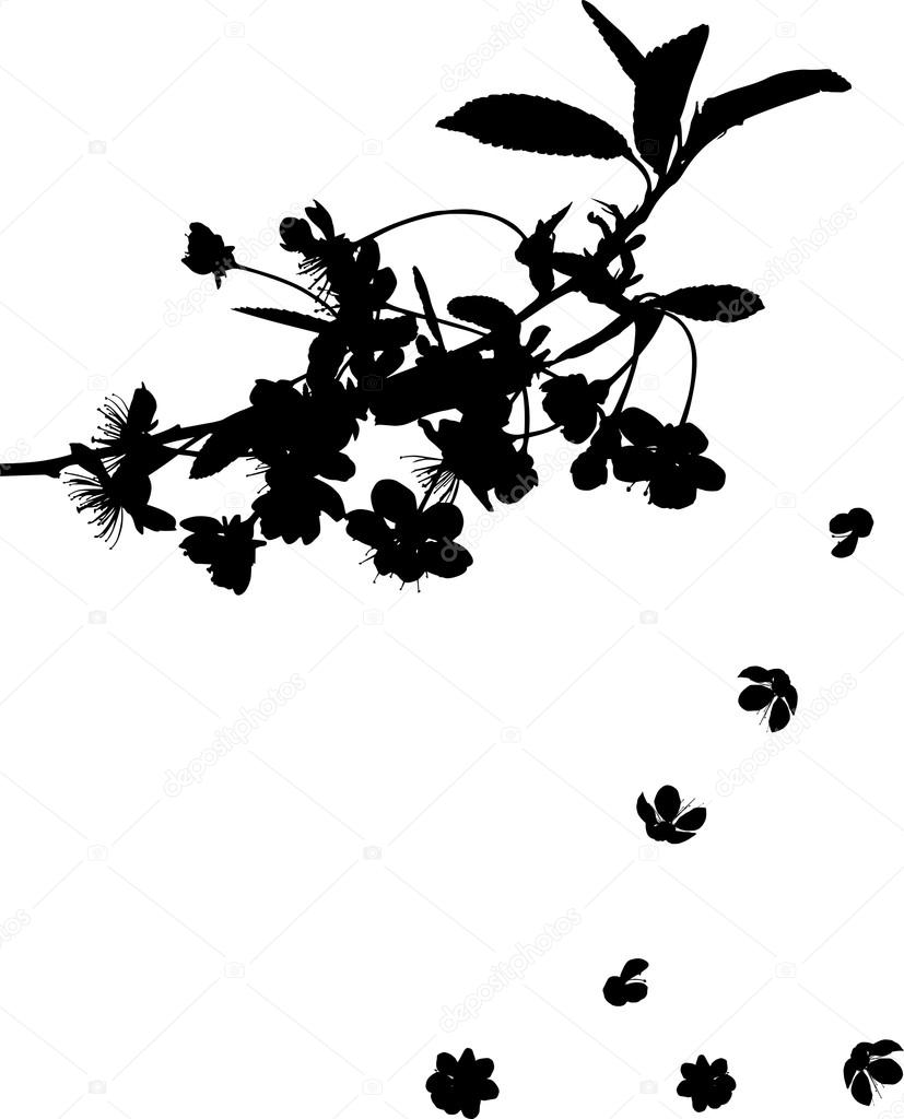 cherry tree branch silhouette with falling flowers � stock