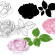Different styles of rose isolated on white — Stock Vector
