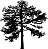 Large old fir tree on white — Vector de stock