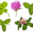 Set of clover leaves and flowers on white — Stock Photo #34866347