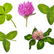 Set of clover leaves and flowers on white — Stock Photo