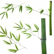 Set of green bamboo brancheson white — Stockfoto