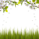 Cherry-tree flowers half frame and green grass — Stock Photo