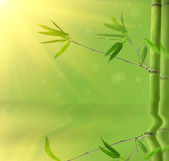 Green bamboo branches with reflection — Stock Photo