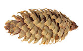 Single isolated fir cone — Stock Photo