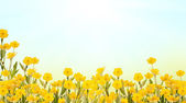 Yellow buttercup flowers background — Stock Photo