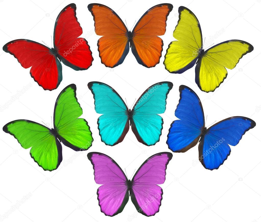 Rainbow color butterflies illustration u2014 Stock Photo u00a9 Dr.PAS ...