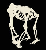 Gorilla skeleton silhouette isolated on black — Vetorial Stock