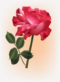 Single red rose with green leaves — Stock Vector