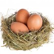 Three eggs in nest — Stock Photo