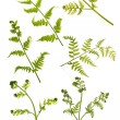 Spring green young fern branches on white — Stock Photo