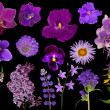 Set of lilac color flowers isolated on black — Stock Photo #34874647