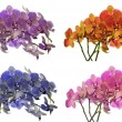Four colors orchid flowers on white — Stock Photo
