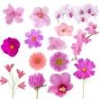 Set of fourteen pink color flowers on white — Stock Photo