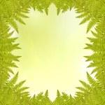 Fern frame on light green background — Stock Photo