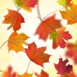 Abstract fall maple foliage background — Stock Photo