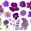 Set of lilac color flowers isolated on white — Stock Photo #34878999