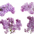 Set of four isolated lilac branches — Stock Photo #34879941