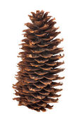 Isolated on white fir cone — Stock Photo