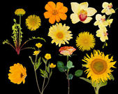 Set of eleven yellow flowers on black — Stock Photo