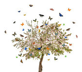 Isolated butterflies and apple tree with flowers — Stock Photo