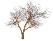 Bare tree with snow remains — Stock Photo