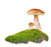 Two penny buns in green moss on white — Stock Photo