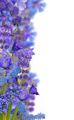 Blue floral strip isolated on white — Stock Photo