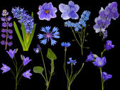 Set of eleven blue flowers on black — Stock Photo