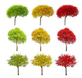 Nine color trees isolated on white — Stock Photo